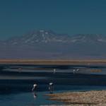 Laguna Chaxa: